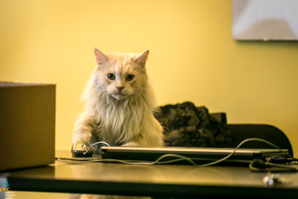 Gatti e lockdown in casa consigli
