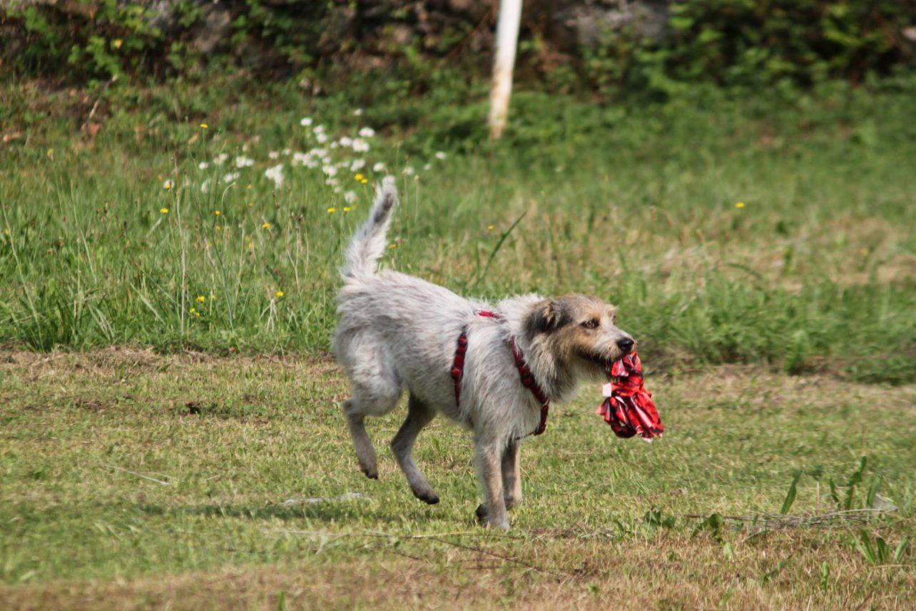 Laboratorio di fiuto per il cane