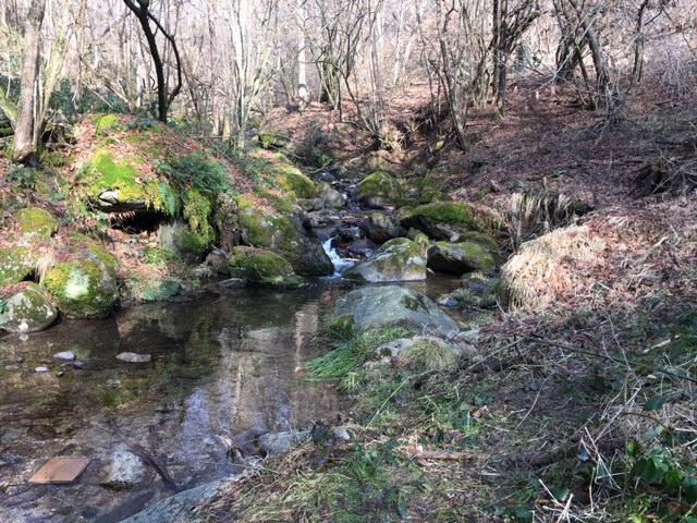 Passeggiata educativa cinofila, trekking con i cani Valle Sessera - Guardabosone Biella / Vercelli