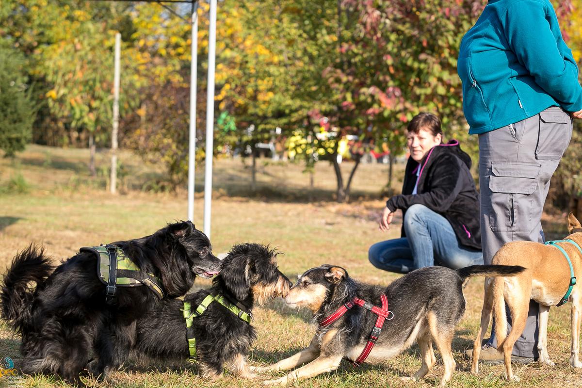 Gruppi di Aggregazione Sociale e Comunicazione per Cani e Umani.