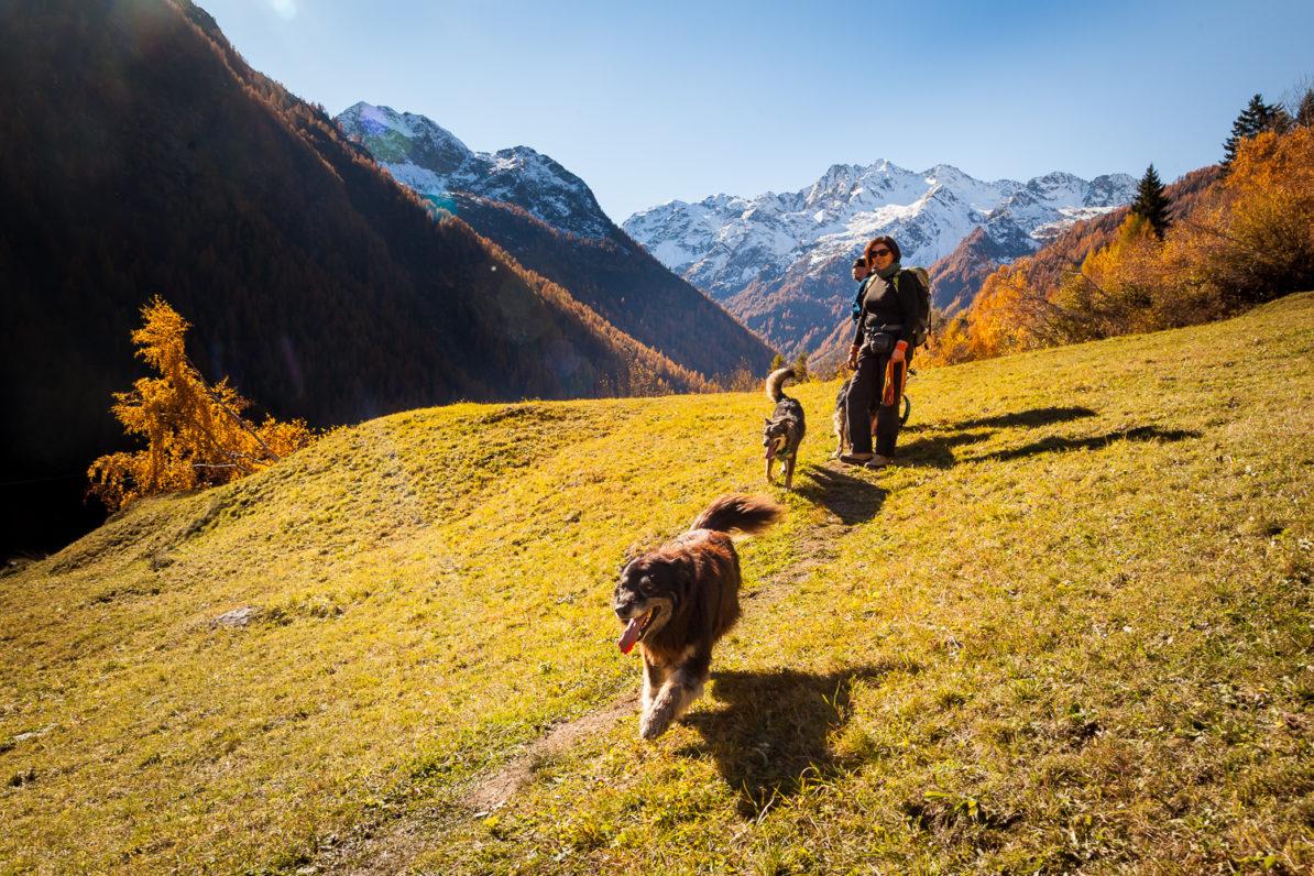 Escursione Cinofila in Val Vogna, passeggiata con il cane Valsesia