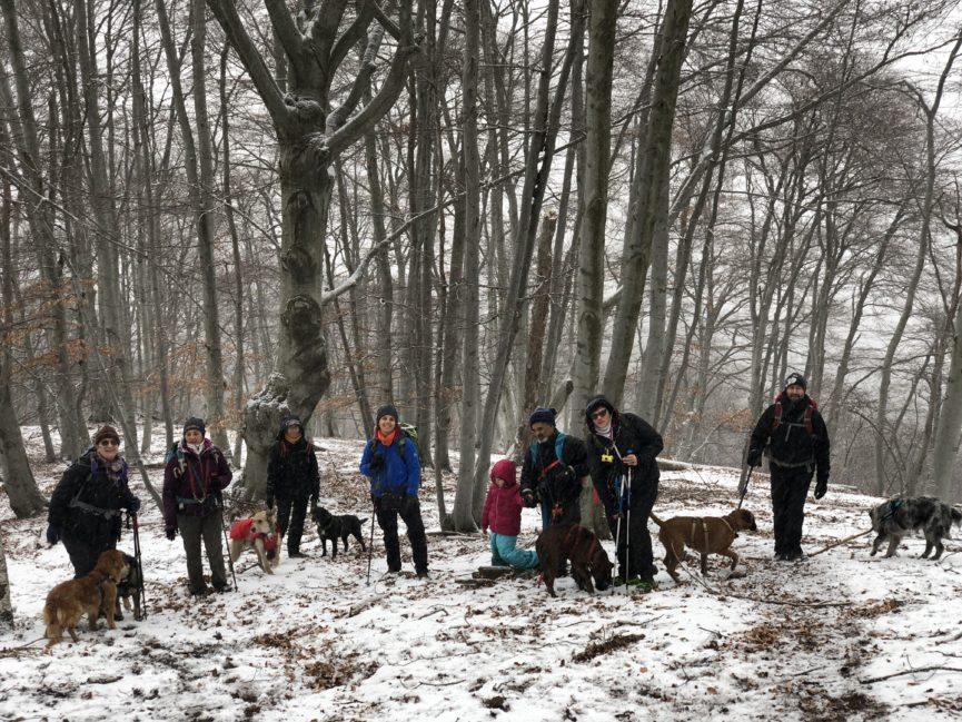 Passeggiata con cani in Valsesia: passeggiata educativa cinofila Rifugio Pastore