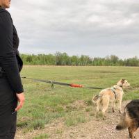 Consigli guinzaglio trekking con il cane e passeggiate