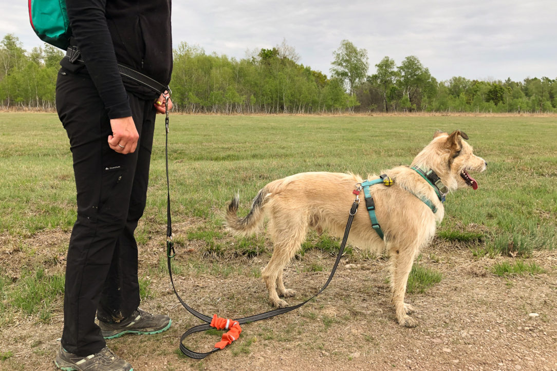 Cintura per il cane, cinghia trekking cane e passeggiate cinofile