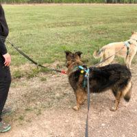 Cinture trekking cane, linea ammortizzata per cani