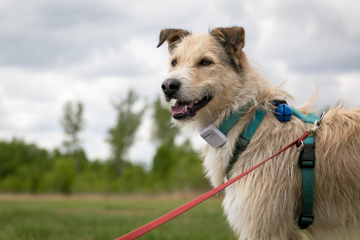 Collari GPS per cani, offerte e sconto