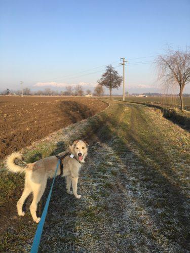 Cammino di Oropa con il cane
